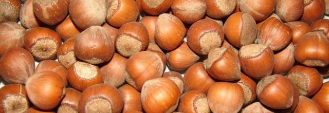 Genetic diversity of Turkish hazelnuts