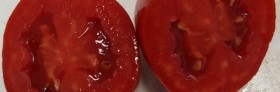A new Turkish processing tomato hybrid
